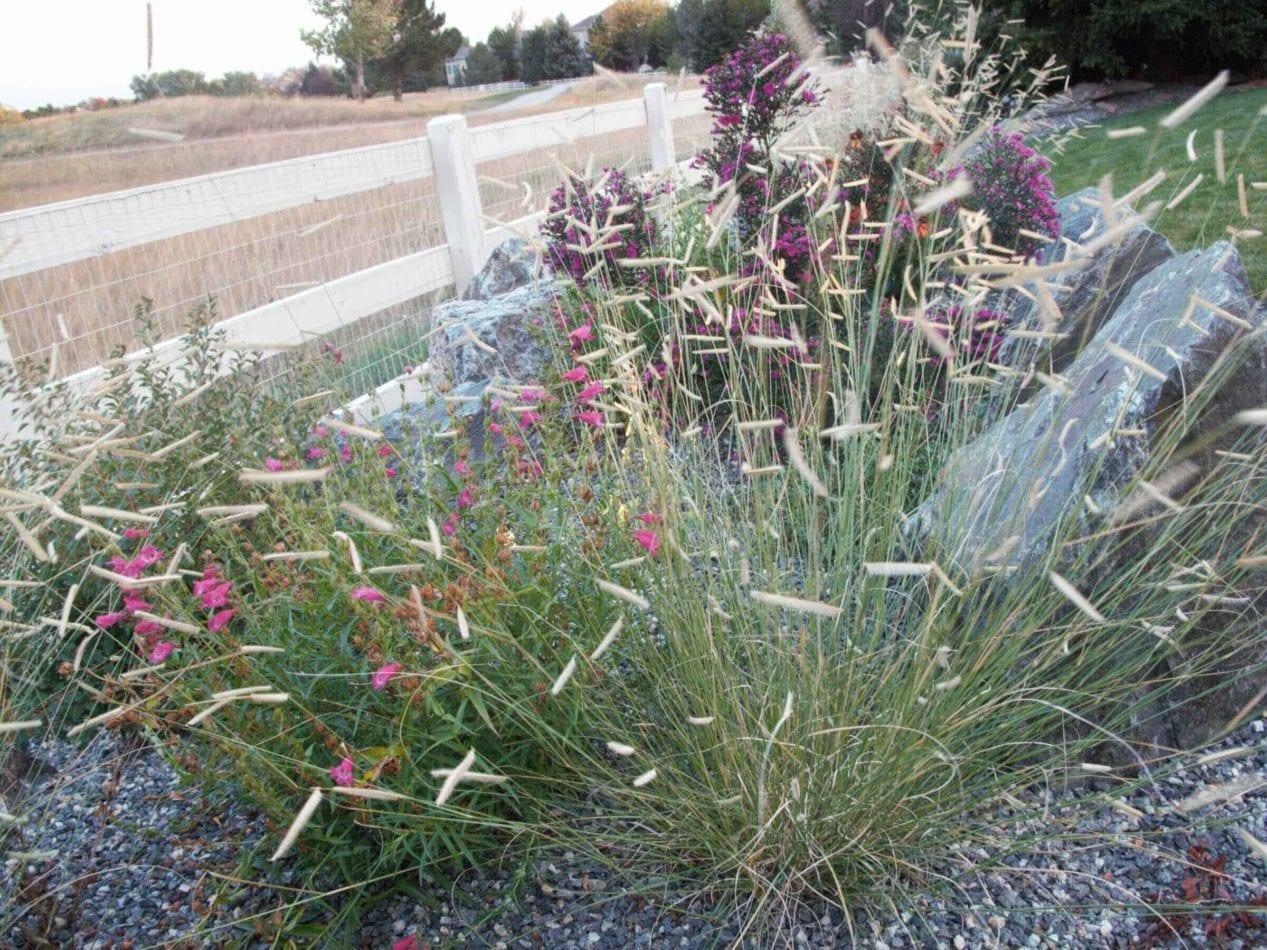 Arvada, Colorado Landscape Contractors